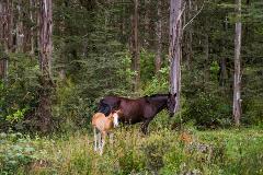 caballos-sello