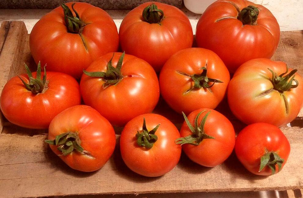 Tomate-3